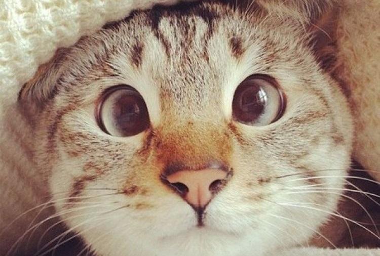 Косоглазая кошка