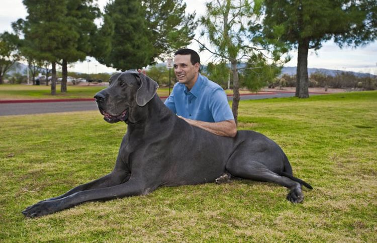 Хозяин с огромной собакой