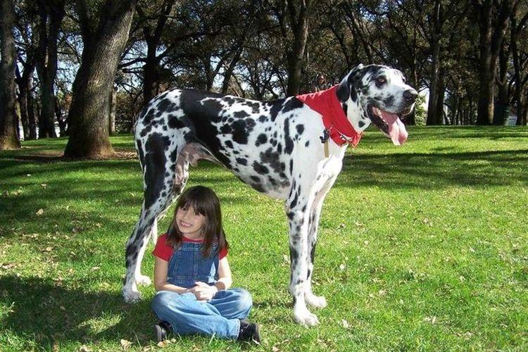 Ребенок с высокой собакой