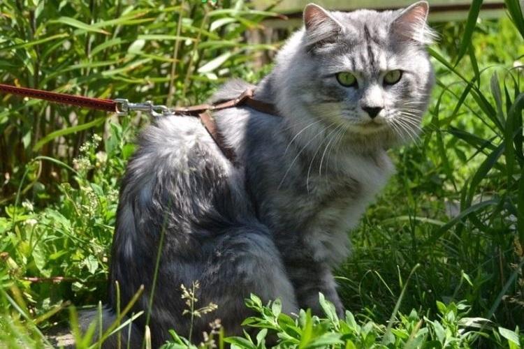 Серый кот сидит в траве