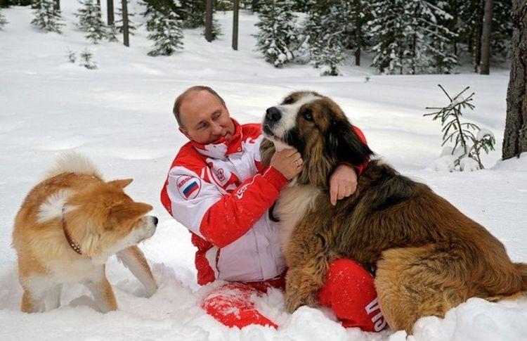 Путин гуляет со своими собаками в снегу