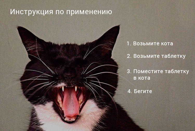 Как дать таблетку коту