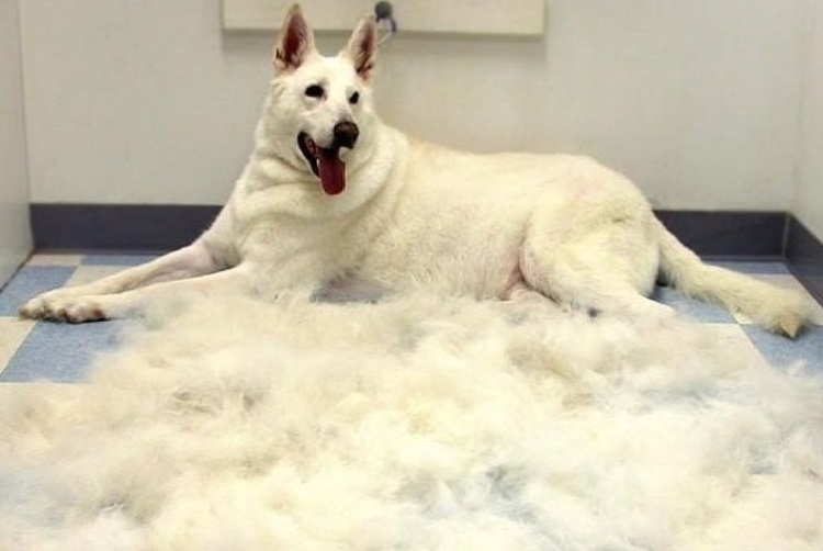 Собака лежит на полу после вычесывания