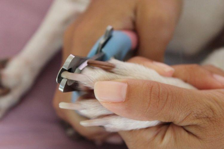 Собаке стригут когти