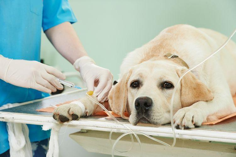Собака на осмотре у доктора