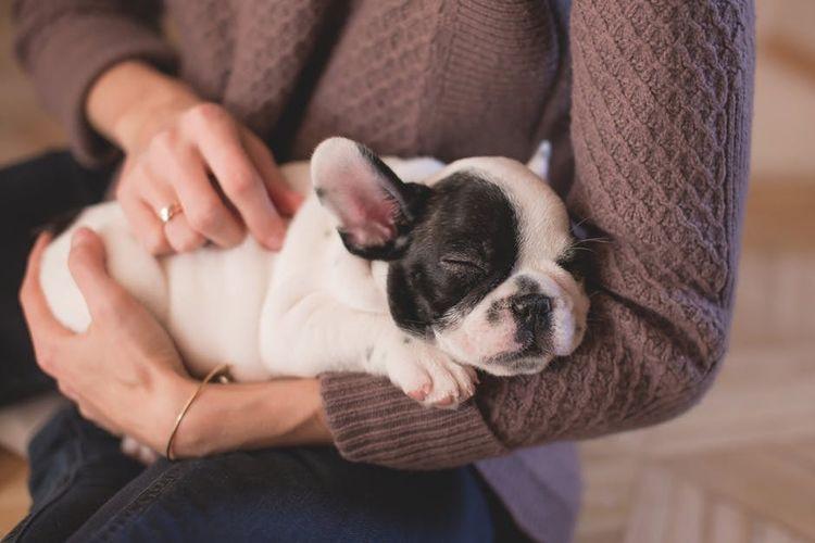 Корм для кошек Royal Canin (0. 5 кг) Renal RF23 — купить по