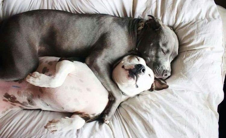 Собаки спят обнявшись
