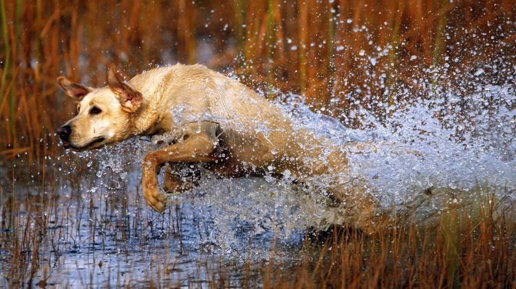 Активная собака