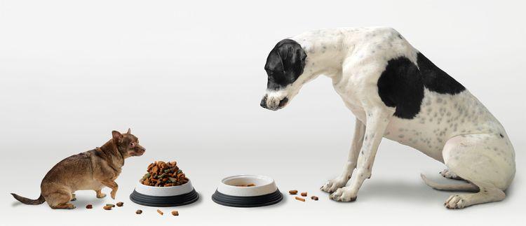Собаки едят сухой корм