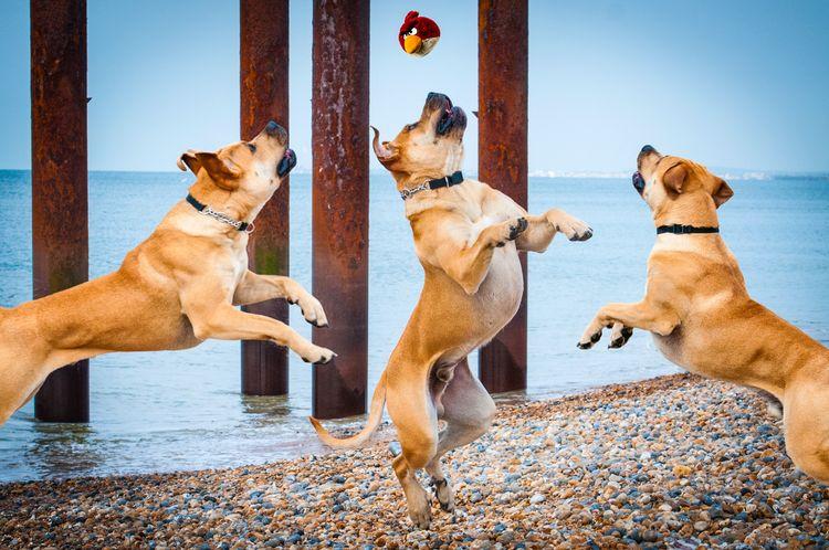 Здоровые собаки
