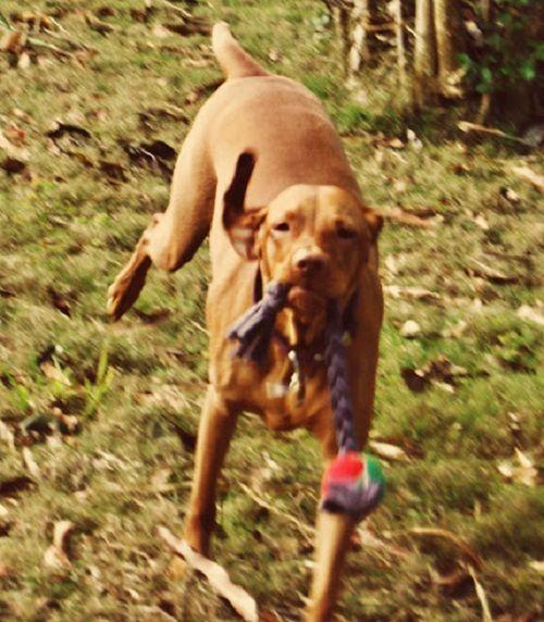 Игрушка для собак крупных пород