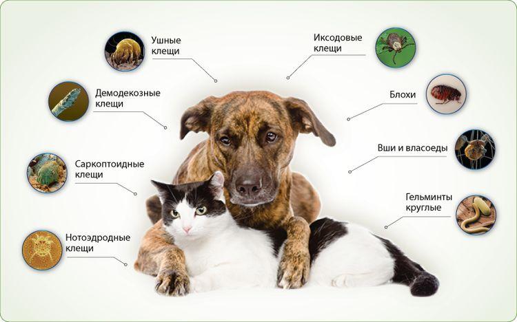 Виды паразитов угрожающих собакам и котам