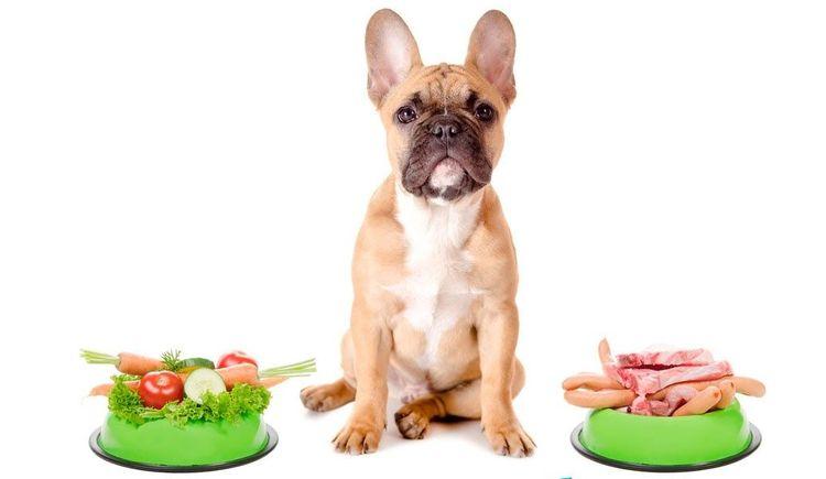 Правильное питание для собаки