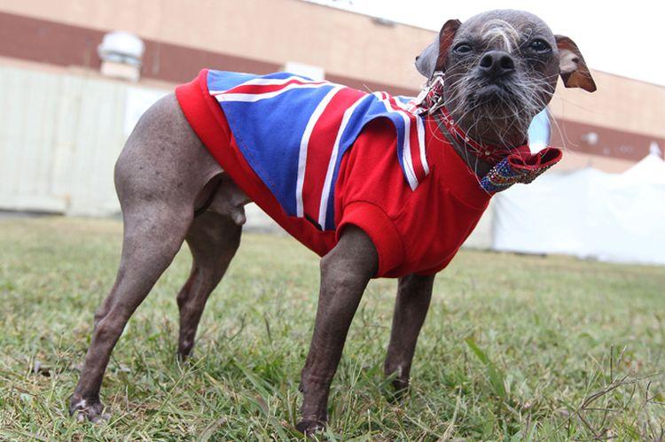 Страшная собака Магли