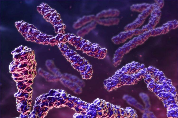 Цепочка хромосом