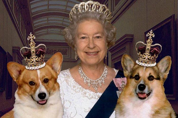 Королева Англии и ее собаки