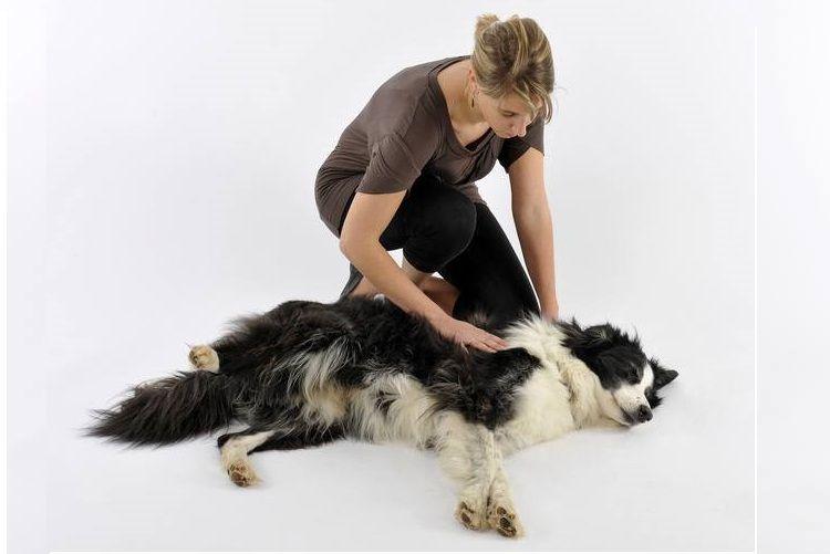 Хозяйка и ее собака