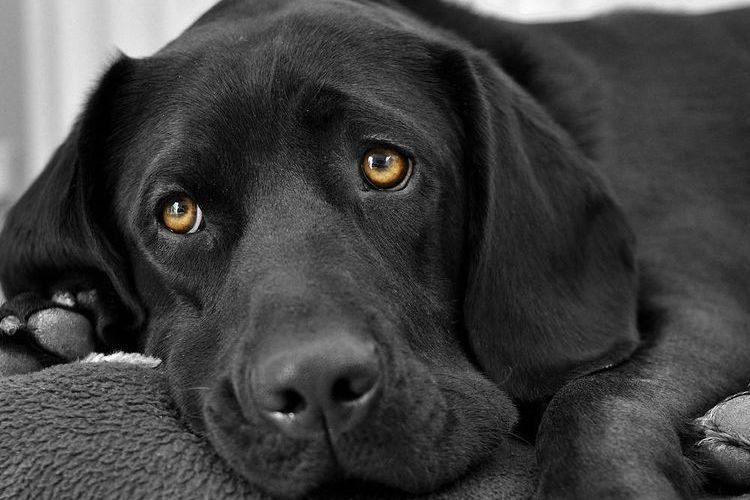 Черная собака грустит
