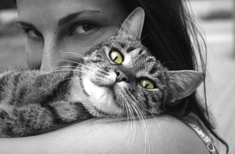 Кошка на плече у хозяйки