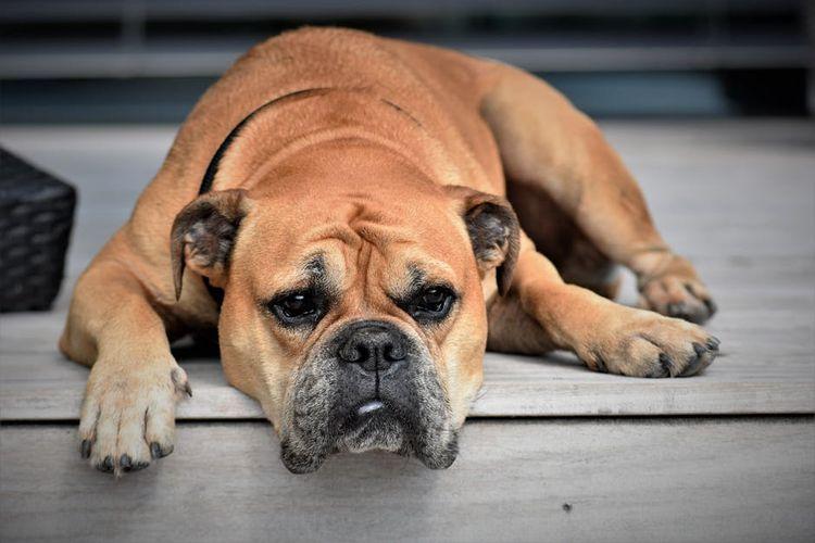 Грустный пес лежит на пороге