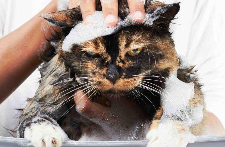 Злой кот в мыльной пене