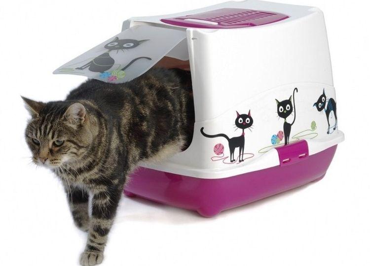 Кошка в лотке-домике