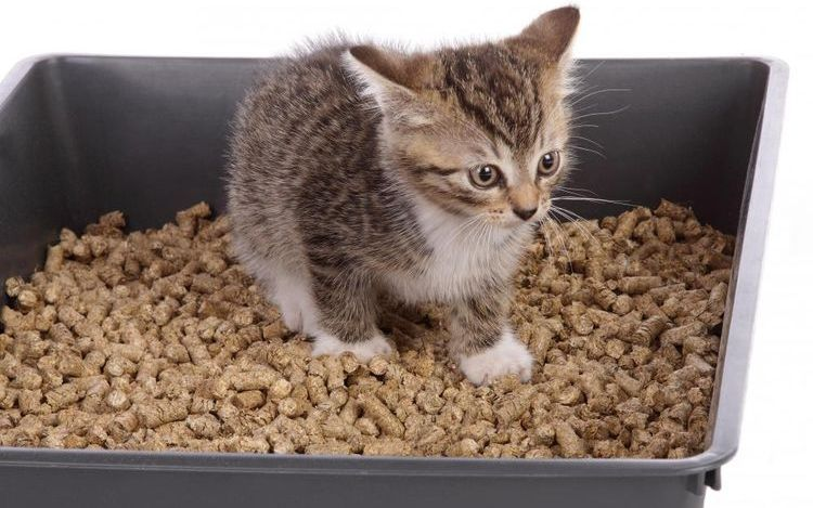 Котенок в лотке с древесным наполнителем