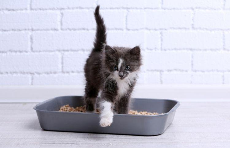 Черно-белый котенок в лотке