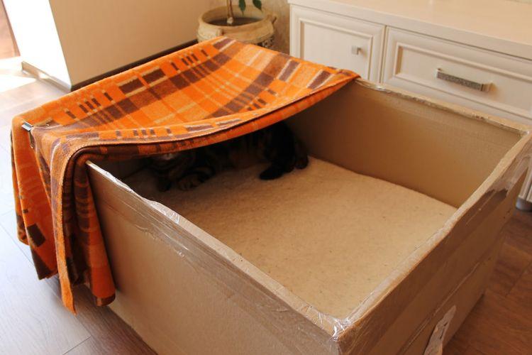 Беременная кошка в коробке