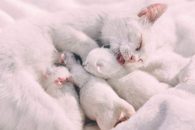 Кошка с новорожденными котятами