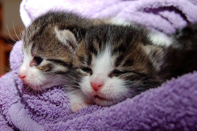 Два крошечный котенка