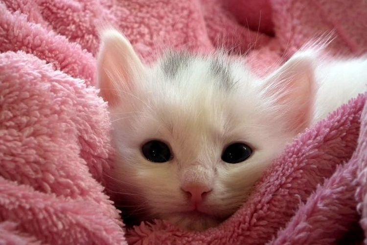 Котенок в розовом полотенце