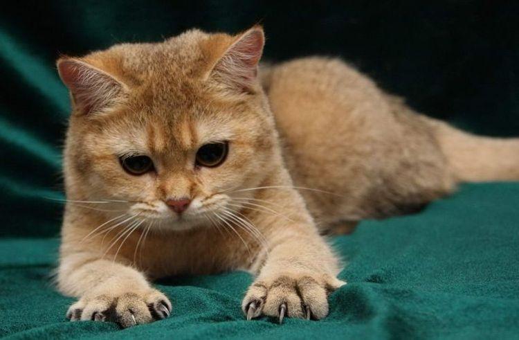 Раздраженный кот