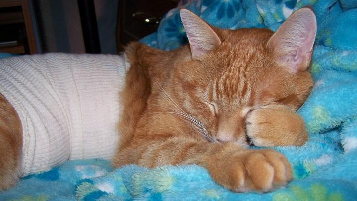 помощь коту с кровью в кале
