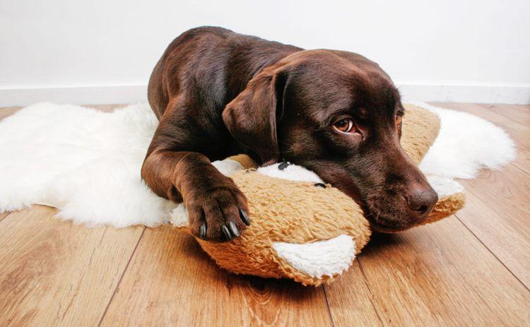 Собака и плюшевая игрушка