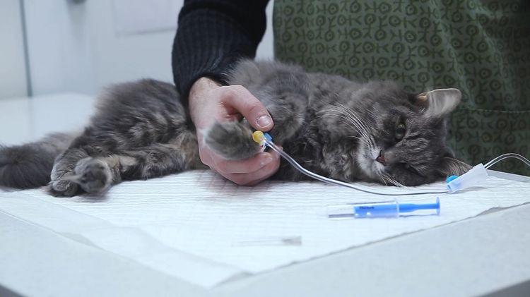 Капельница кошке