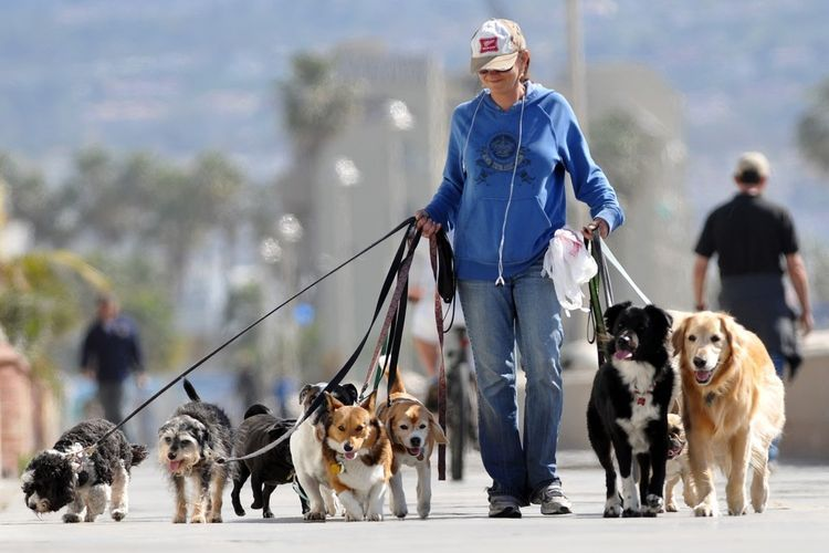 Женщина выгуливает собак