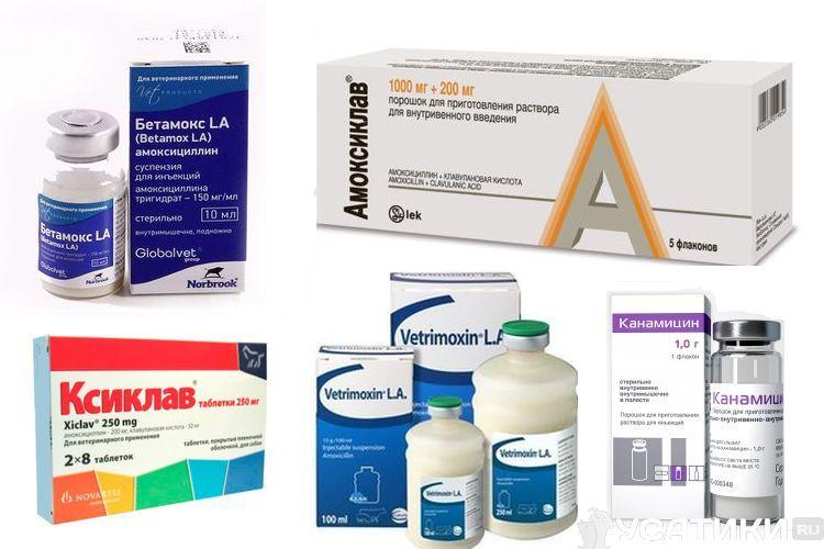 Антибиотики для котов