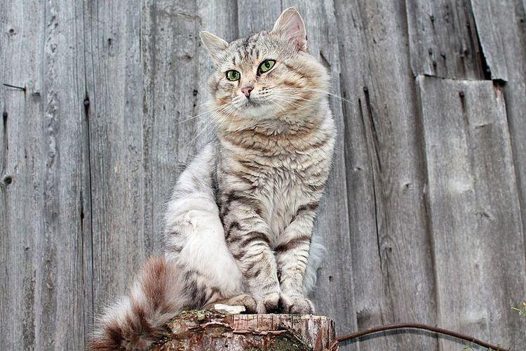 Кот сидит на пеньке