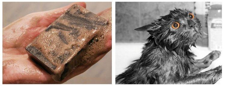 Как помыть кошку дегтярным мылом