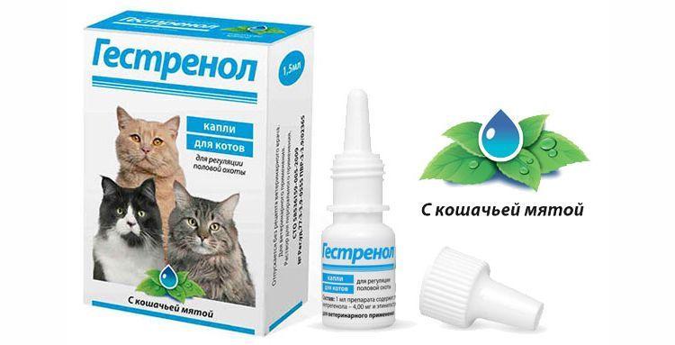 Капли Гестренол для котов