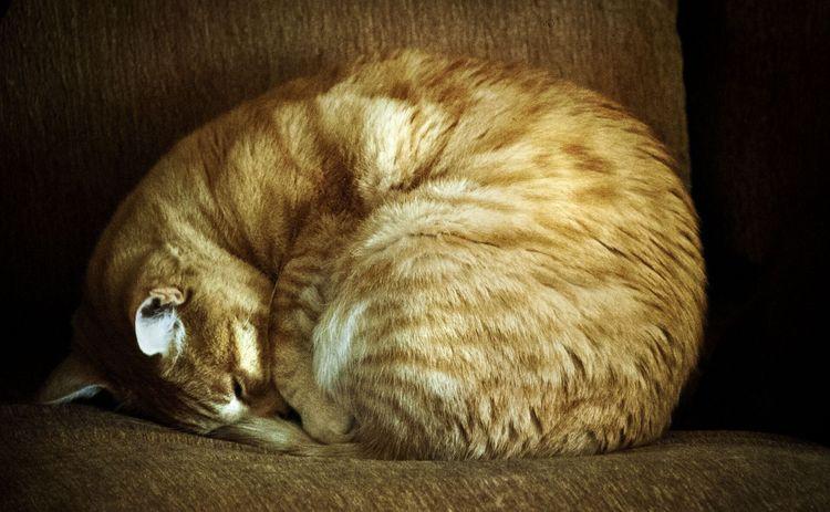 Кот свернулся клубком