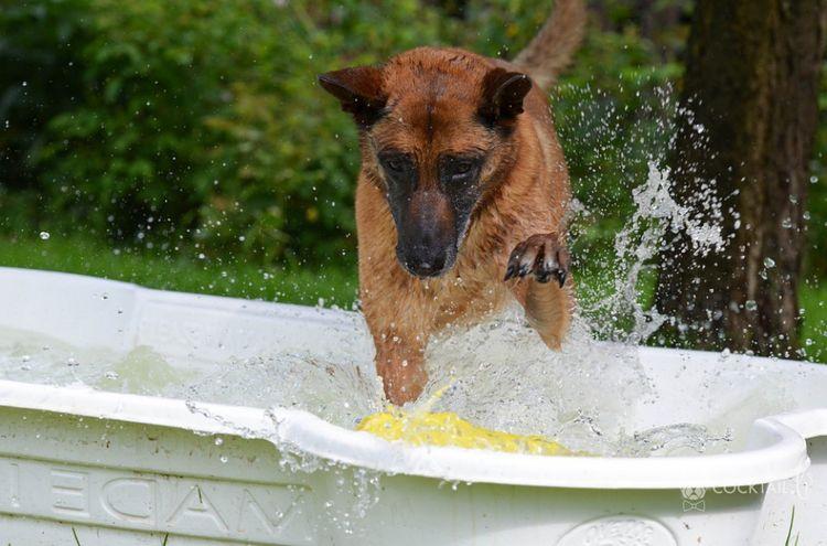 Собака прыгает в ванную