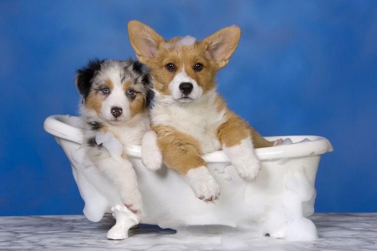 Две маленькие собачки в ванной