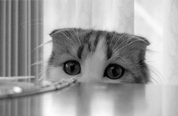 Котенок смотрит на стол