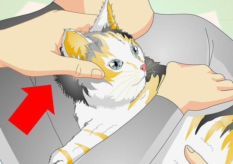 Измерение температуры кошке ушным термометром