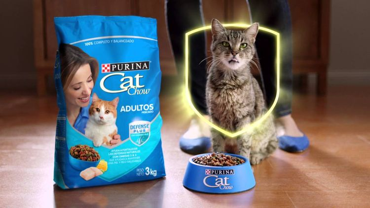 Кошка и корм Кет Чау