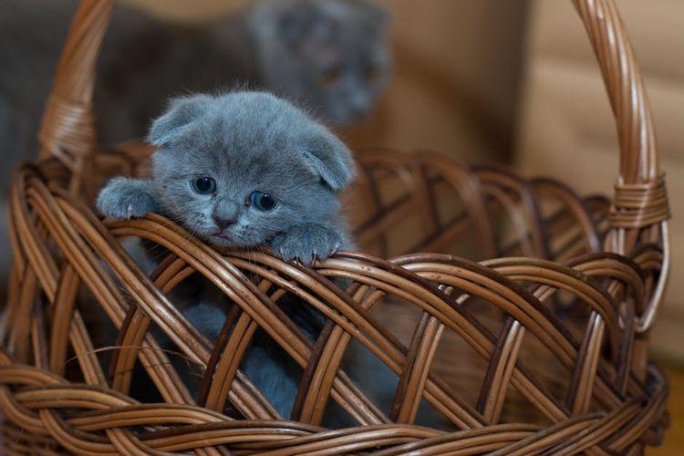 Грустный котенок в корзинке