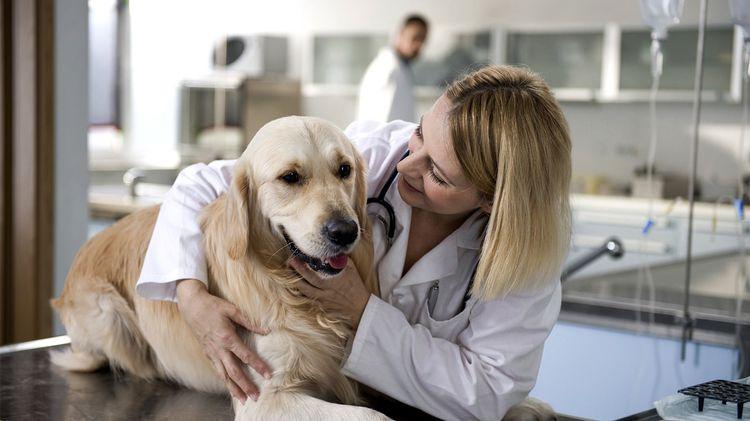 Собака у врача