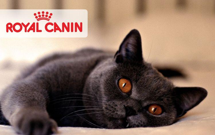 Кошка и корм роял канин